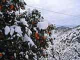 Sníh na Korfu